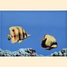 Atem Mono Fish 2 плитка декоративная