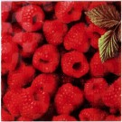 Atem Orly Raspberry W 200x200 декоративная